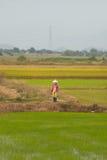 Vietnamese vrouw bij padievelden, Vietnam Royalty-vrije Stock Afbeeldingen