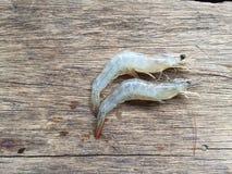 The Vietnamese whiteleg shrimp, Litopenaeus vannamei Royalty Free Stock Photo