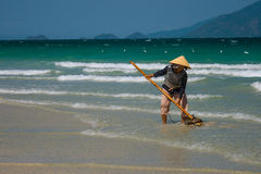 A Vietnamese woman is collecting sea shells on the shore in Nha Trang, Vietnam Stock Image