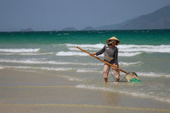 A Vietnamese woman is collecting sea shells on the shore in Nha Trang, Vietnam. NHA TRANG, VIETNAM - MAY 20, 2015: A Vietnamese woman who is wearing a Royalty Free Stock Photo