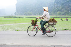 Vietnamese woman at conical hat on bicycle going for work at ric Stock Images