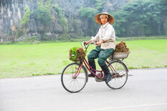 Vietnamese woman at conical hat on bicycle going for work at ric Stock Photo