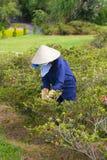 Vietnamese woman gardener Royalty Free Stock Image