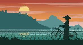 Vietnamese woman hold bicycle walk pass rice field on sunset tim royalty free illustration