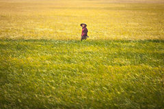 Vietnamese woman at rice fields on 26 of December 2013, Vietnam Royalty Free Stock Images
