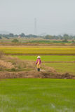 Vietnamese woman at rice fields, Vietnam. Woman at rice fields captured from a passing train in Vietnam Royalty Free Stock Images