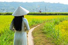 Vietnamese woman standing on the rice field stock photos