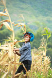 Vietnamese woman working on corn field in North of Vietnam Stock Images