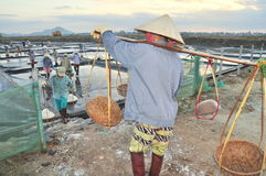 Vietnamese women are burdening hard to collect salt from the extract fields to the storage fields Stock Image