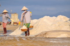 Vietnamese women are burdening hard to collect salt from the extract fields to the storage fields Stock Images