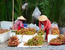 Vietnamese women selling many tropical fruits Stock Photography