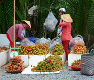 Vietnamese women selling many tropical fruits Royalty Free Stock Photography
