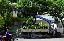 Free Vietnamese Worker Work On Boom Lift To Cut Branch Of Tree Stock Images - 152930114