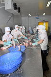 Vietnamese workers are filleting pangasius fish in a seafood processing plant in the mekong delta Royalty Free Stock Images