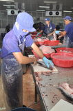 Vietnamese workers are filleting pangasius fish in a seafood processing plant in the mekong delta Stock Photo