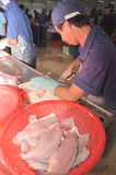 Vietnamese workers are filleting pangasius fish in a seafood processing plant in the mekong delta Royalty Free Stock Photos