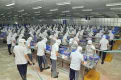 Vietnamese workers are filleting pangasius fish in a seafood processing plant in the mekong delta Stock Photography