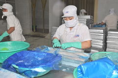 Vietnamese workers are sorting pangasius fish after filleting in a seafood processing plant in the mekong delta Stock Photo