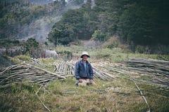 Vietnamesische Blockwinde Stockfoto