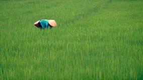 Vietnamesische Frau auf dem Reisgebiet Stockfotos