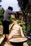 Vietnamesische Frau filtert Reis Stockfotos
