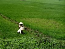 Vietnamesische Landwirte lizenzfreies stockbild
