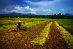 Vietnamesischer Landwirt Stockfotos
