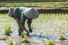 Vietnamesischer Landwirt, der Reis pflanzt Lizenzfreie Stockfotografie