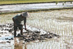 Vietnamesischer Landwirt, der Reis pflanzt lizenzfreies stockfoto