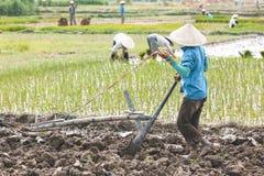 Vietnamesischer Landwirt, der Reis pflanzt stockbild