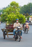 Vietnamesischer Motorradfahrer fährt Gartenbäume Stockfotografie