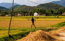 Vietnamesisk bonde som arbetar i risfälten royaltyfria foton