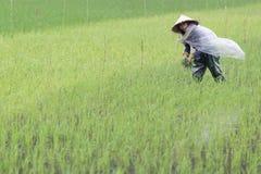 Vietnamesisk bondeWorking In A risfält royaltyfri bild