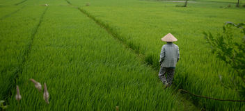 Vietnamesisk tapet Royaltyfri Fotografi