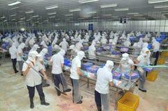 Vietnamesiska arbetare filea pangasiusfisken i en havs- bearbetningsanläggning i den mekong deltan Arkivbilder