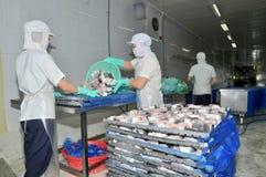 Vietnamesiska arbetare sorterar pangasiusfisken, når de har klippt i en havs- bearbetningsanläggning i den mekong deltan Arkivfoton