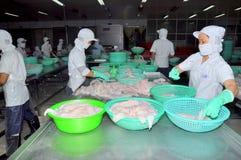 Vietnamesiska arbetare sorterar pangasiusfisken, når de har klippt i en havs- bearbetningsanläggning i den mekong deltan Arkivbild