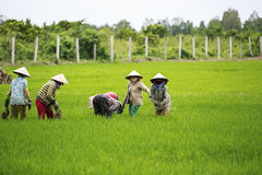 Vietnamesiska bönder Fotografering för Bildbyråer