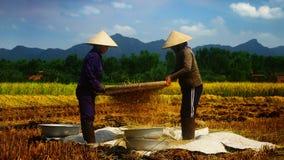 vietnamesiska bönder Arkivfoto