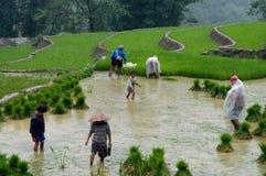 Vietnamesiska bönder i ricefält Royaltyfria Bilder