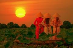 Vietnamesiska kvinnor samlar lotusblommasolnedgången royaltyfria foton