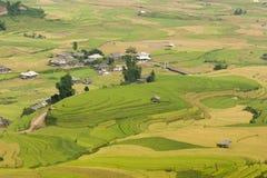 Vietnamesiska ris terrasserade risfältfältet i plockningsäsong Terrasserade risfältfält används brett i ris-, vete- och kornlantb Royaltyfri Bild