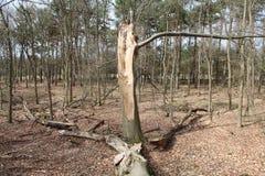 Broken Tree. A vieuw of a broken tree Stock Image