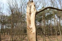 Broken Tree. A vieuw of a broken tree Stock Images