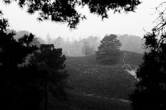 vieuw del árbol Imagen de archivo libre de regalías