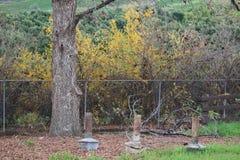 Vieux appareils de chauffage d'orangeraie et buissons de grenade Image libre de droits
