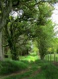 Vieux arbres Photo libre de droits
