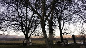 Vieux arbres Images stock