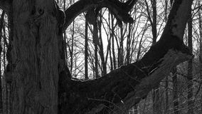 Vieux arbres Photo stock
