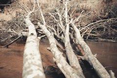 Vieux arbres d'Alling Forest River Photo saisonnière de concept Image libre de droits